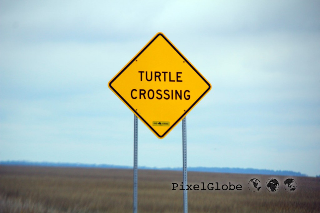TurtleCrossing