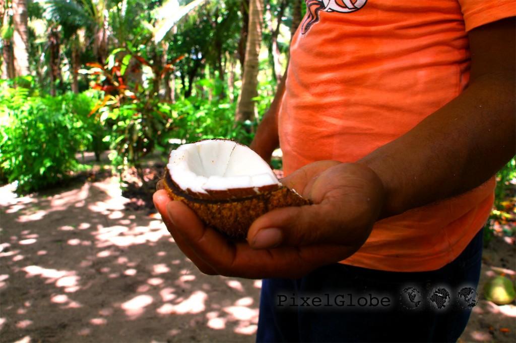 Kokosnuesse2