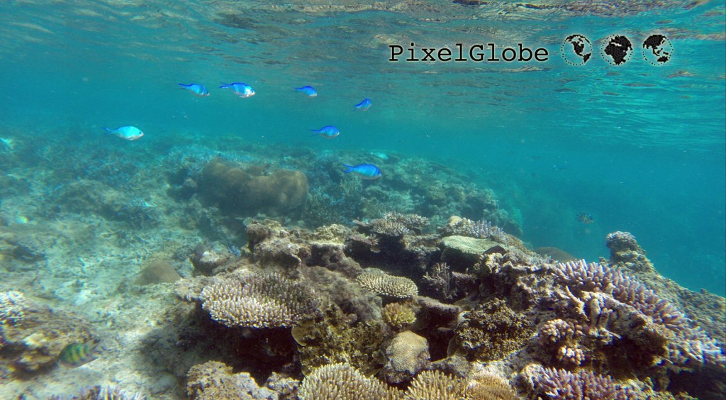 Reef5