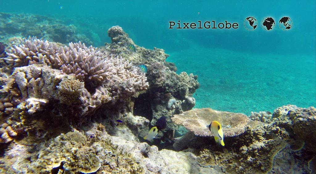 Reef6
