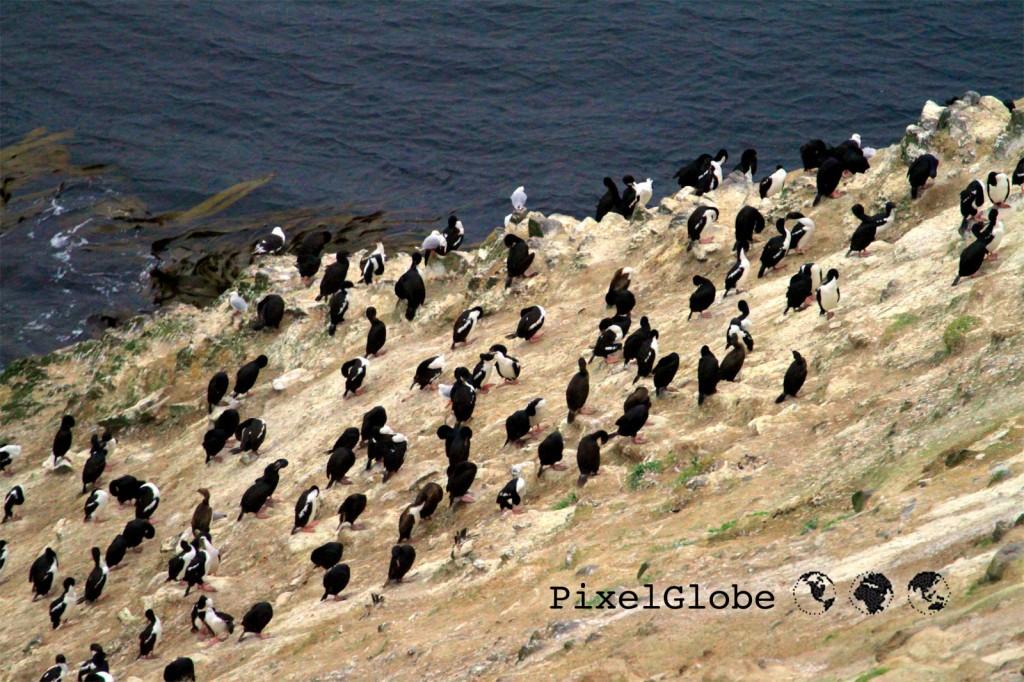 konnten pinguine mal fliegen