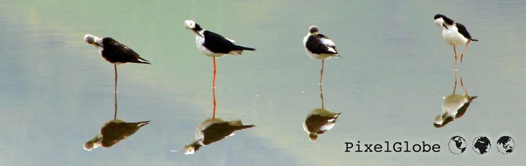 Poaka-BirdOnAWireCrop