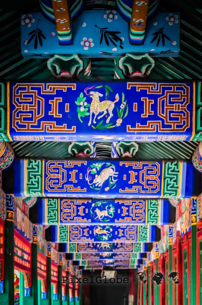 Peking-61
